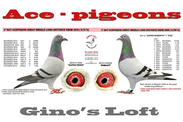 Ace pigeons