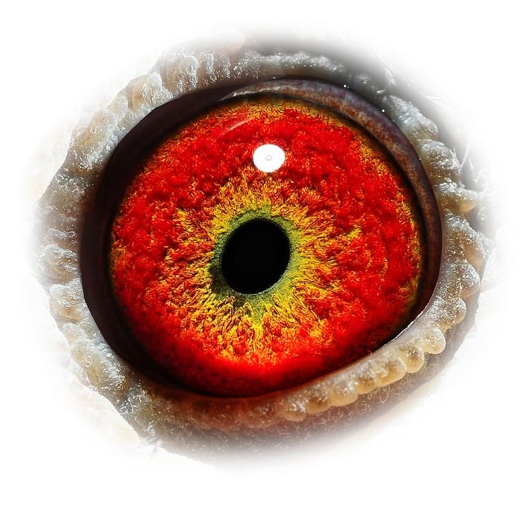 Be15 3147872 eye