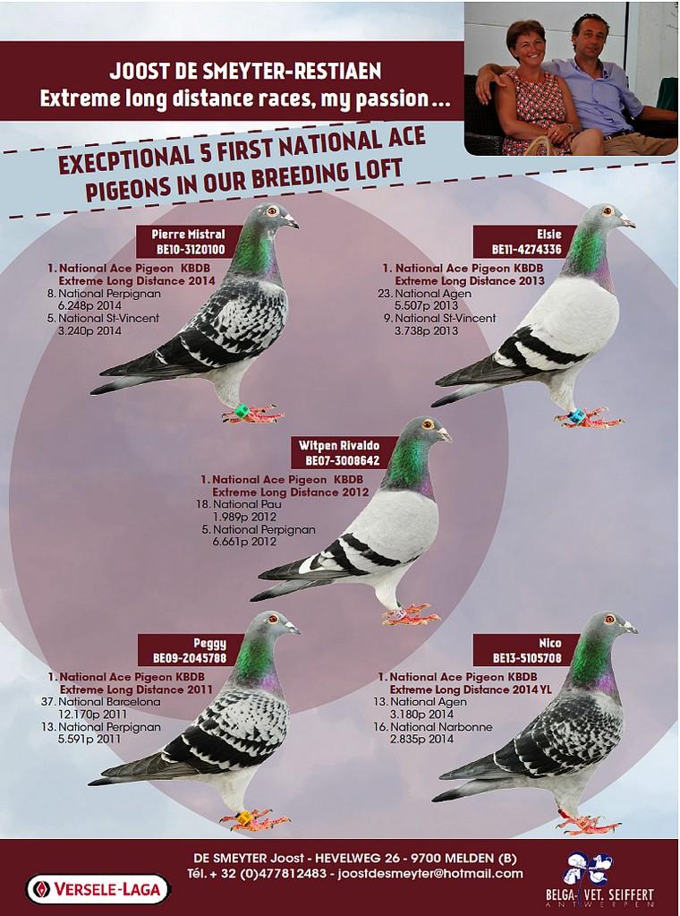 Top pigeon de smeyter restiaen