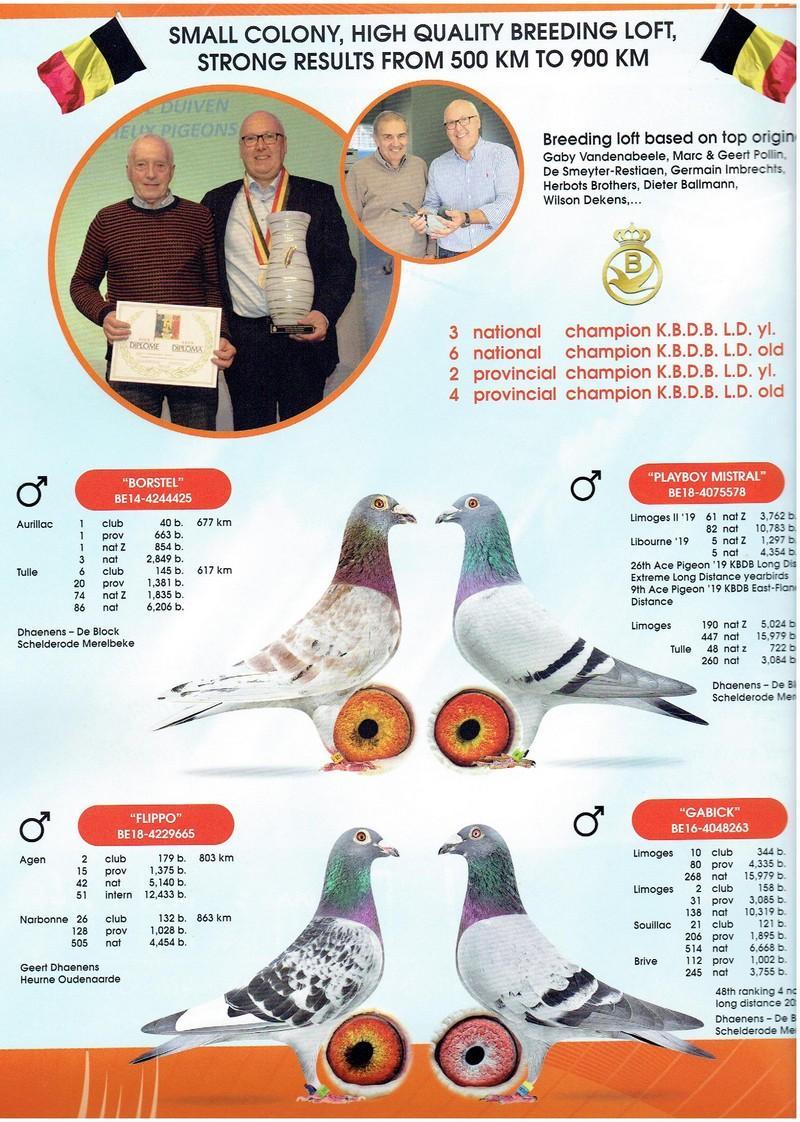 Dhaenens Geert 6e Champion National Grand Fond RFCB 2020 & 4e Champion  Provincial Fond 2020